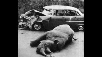 Прикрепленное изображение: rhino_vs_car.jpg