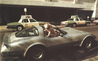 Прикрепленное изображение: Собака в авто.jpg