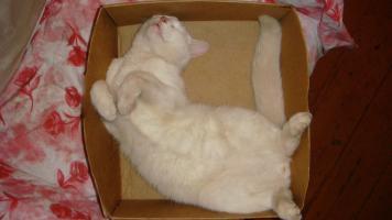 Прикрепленное изображение: Кошак.jpg