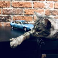 Прикрепленное изображение: Кот и Ситроен (1).jpg