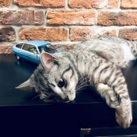 Прикрепленное изображение: Кот и Ситроен (3).jpg