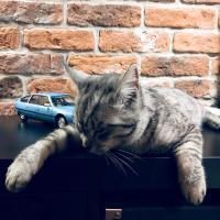 Прикрепленное изображение: Кот и Ситроен (2).jpg
