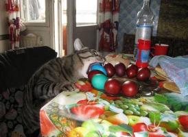 Прикрепленное изображение: кот-живность-пасха-песочница-1193283 (1).jpg