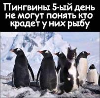 Прикрепленное изображение: up185539-13cc69c2_a48a_4ec6_8fd6_fdff36882eb6-kot.jpg