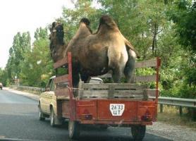 Прикрепленное изображение: transport4.jpg