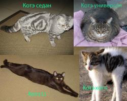 Прикрепленное изображение: котэ\'s.jpg