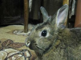 Прикрепленное изображение: Кроль.jpg