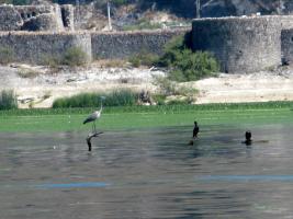 Прикрепленное изображение: Черногория-2010 133.JPG