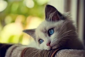 Прикрепленное изображение: Кошка.jpg
