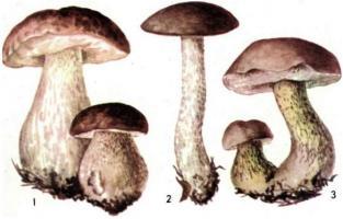 Прикрепленное изображение: 1-Белый гриб, 2-подберезовик, 3-желчный или ложный белый гриб.JPG