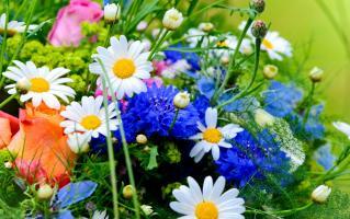 Прикрепленное изображение: flowers.jpg