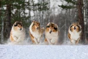 Прикрепленное изображение: собаки.jpg
