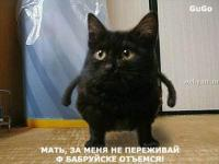 Прикрепленное изображение: talkin_cats_7.jpg
