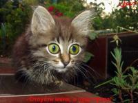 Прикрепленное изображение: talkin_cats_43.jpg