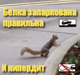 Прикрепленное изображение: tigra0487584.jpg