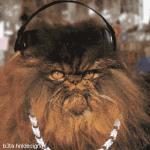 Прикрепленное изображение: catmusic02.gif