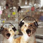 Прикрепленное изображение: catmusic03.gif