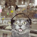 Прикрепленное изображение: catmusic06.gif