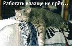 Прикрепленное изображение: talkin_cats_15.jpg