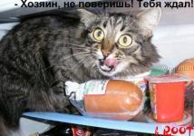 Прикрепленное изображение: talkin_cats_42.jpg