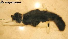 Прикрепленное изображение: kotofej_09.jpg