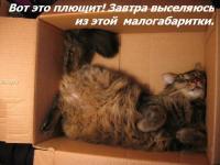 Прикрепленное изображение: kotofej_27.jpg